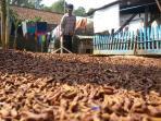 petani-cengkeh-keringkan-hasil-panen_20150810_111119.jpg
