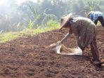 petani-di-banjaran-mulai-beralih-tanam-sayuran.jpg