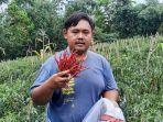 petani-muda-ananda-dwi-septian-27-saat-melakukan-panen-sayuran-cabai.jpg