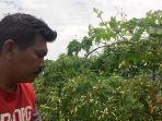 petani-sayur-di-kampung-baduyut-desa-hegarsari-kecamatan-kadungora.jpg