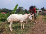peternak-domba-di-purwakarta-saat-memasarkan-hewan-kurban.jpg