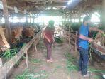 peternak-sapi-dan-kambing-milik-karsim-46-di-desa-emplak-kecamatan-kalipucang.jpg