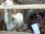 peternak-susu-kambing-di-purwakarta_2.jpg