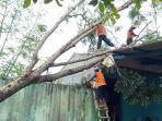 petugas-bpbd-saat-mengevakuasi-sebuah-pohon.jpg