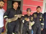 petugas-pemadam-kebakaran-kuningan-manangkap-biawak-1.jpg