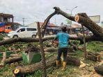 petugas-saat-mengevakuasi-pohon-yang-tumbang.jpg