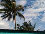 pohon-kelapa-tertiup-angin_20161221_163434.jpg