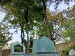 pohon-nagasari-di-indramayu.jpg