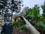 pohon-tumbang-di-kampung-rancahaur-tamansari-jumat-81-sore.jpg
