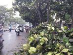pohon-tumbang-timpa-taksi-online-di-jalan-soekarno-hatta-akibat-hujan-deras-dan-angin-kencang.jpg