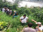 polisi-temukan-ladang-ganja-di-purwakarta-sabtu-1622019.jpg