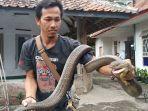 rentul-pawang-ular-di-kuningan-1.jpg