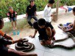 riki-aditya-sedang-menunjukkan-ular-ular-hasil-tangkapan-di-sungai-cigadung-kabupaten-subang.jpg