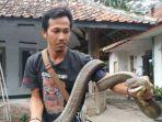 rinto-menunjukkan-covid-ular-kobra-peliharaannya.jpg