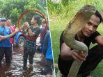 rizky-tewas-dipatuk-ular-king-kobra-peliharaan-sendiri_20180710_221607.jpg