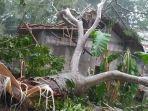 rumah-seorang-warga-tertimpa-pohon-besar-di-dusun-gerewing-pangandaran.jpg