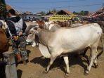 sapi-yang-dijual-di-pasar-hewan-tanjungsari_20180814_192932.jpg
