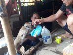 satu-dari-tiga-ekor-monyet-ekor-panjang-yang-masih-hidup-diberi-makanan.jpg