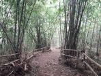 suasana-hutan-bambu-di-jalan-cilengkrang-1-cisurupan-kecamatan-cibiru.jpg