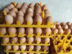 telur-infertil-dan-telur-biasa.jpg