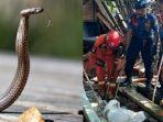ular-berbisa-di-kampung-sawah-bogor.jpg