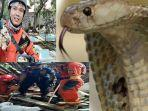 ular-kobra-tim-rescue-damkar-kabupaten-bogor-_1.jpg
