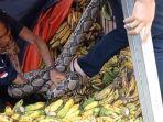 ular-sanca-di-pasar-sukabumi.jpg