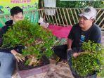 usaha-mikro-kecil-menengah-tanaman-bonsai-di-komunitas-bonsai-cianjur.jpg