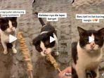 video-viral-kucing-menangis-saat-diberi-makanan.jpg