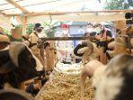wakil-gubernur-jawa-barat-uu-ruzhanul-ulum-saat-berkunjung-ke-pasar-hewan.jpg
