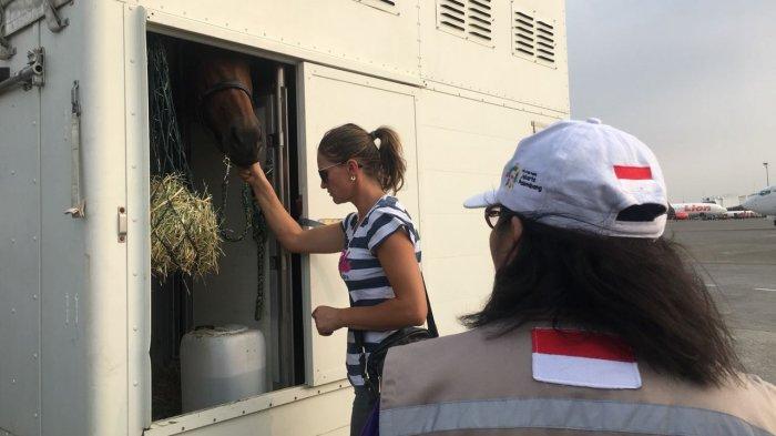17 Kuda Asal Belgia untuk Asian Games 2018 Mendarat di Bandara Soekarno-Hatta
