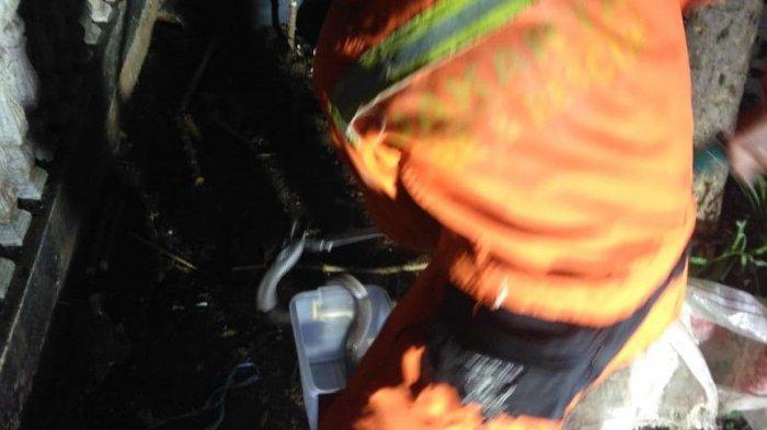 Tiga Ekor Ular Kobra Dievakuasi dari Pekarangan Rumah Warga di Kembangan