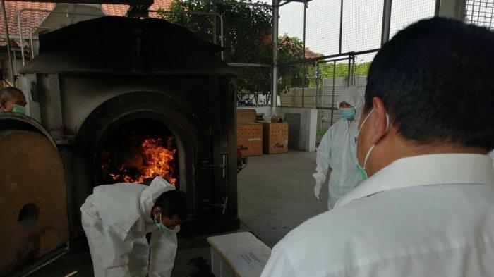 Mengandung Bakteri Ganas, 315 Bibit Kaktus Asal Italia Dimusnahkan di Bandara Soekarno-Hatta - 315-bibit-kaktus-dimusnahkan-2.jpg