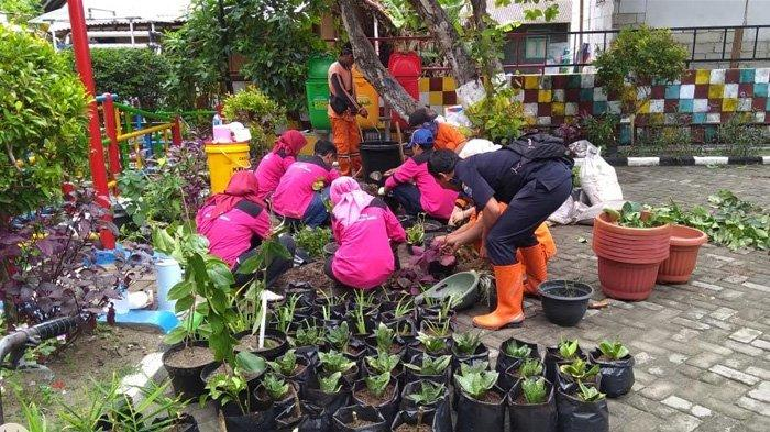 Kreatif! Kelurahan Pulau Tidung Manfaatkan Abu Vulkanik Gunung Anak Krakatau untuk Tanam Pohom
