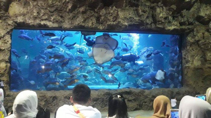 Promo Agustus, Masuk Sea World Sekaligus Ocean Dream Samudera Mulai Rp 115 Ribu