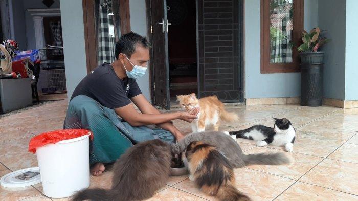 Kehilangan Kucing Kesayangan, Afri Buat Spanduk Khusus untuk Cari Ucil: Kasian, Dia Masih Menyusui