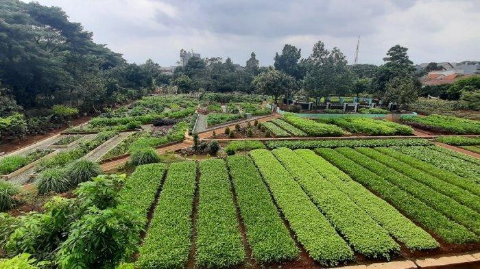 Agro Eduwisata Ragunan, destinasi liburan baru di Jakarta Selatan. Di sini bisa jalan-jalan menikmati udara segar sambil belajar tentang berbagai jenis tanaman.