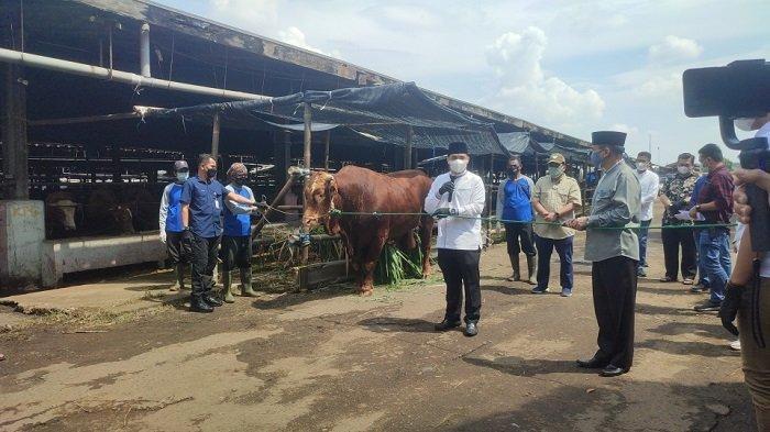 Wakil Gubernur DKI Jakarta Ahmad Riza Patria menyerahkan secara simbolis sapi kurban miliknya untuk disembelih di Rumah Pemotongan Hewan (RPH) Dharma Jaya, Penggilingan, Cakung, Jakarta Timur, Selasa (20/7/2021)