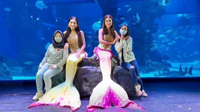 Bisa Tahan Nafas Tanpa Alat Bantu, Ternyata Ini Sosok Dibalik Mermaid di Jakarta Aquarium