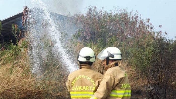 Musim Kemarau, Alang-alang Lahan Terbuka di Cakung Terbakar