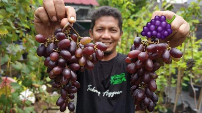 Tips Berkebun Anggur di Perkotaan dari Pemilik Toekang Anggoer Bekasi