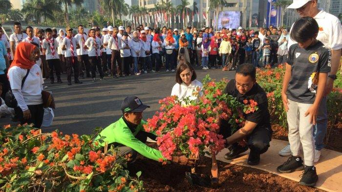 Pemprov DKI Tanam 100 Ribu Bougenville Amenities di Kawasan Jalan Sudirman hingga MH Thamrin