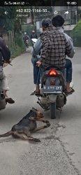 Seekor anjing mengalami penyiksaan di bilangan Jalan Dumpit, Jatiuwung, Kota Tangerang, Senin (1/2/2021) pagi.