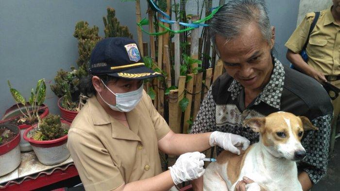 Cegah Rabies, Sudin KPKP Jakarta Pusat Telah Memvaksin 5.087 Hewan