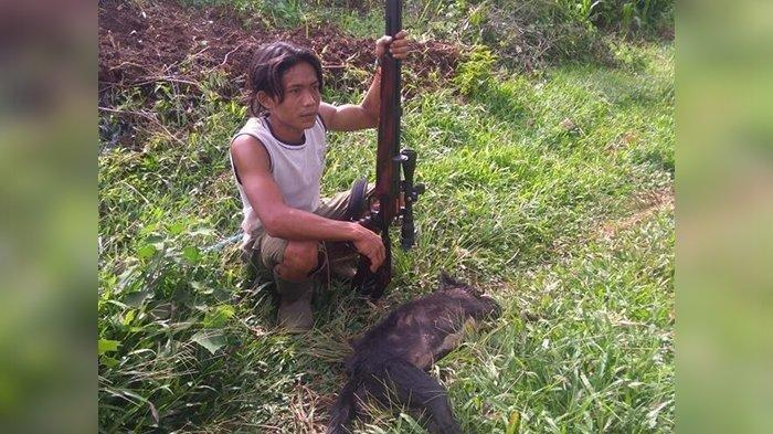 Anjing hutan yang berhasil ditangkap warga.  Sekelompok Ajag atau anjing hutan dinilai jadi penyebab dibalik misteri matinya puluhan ekor kambing dan satu anak sapi di Kabupaten Kuningan, Jawa Barat.