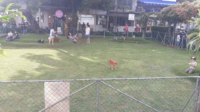 Anjing piaraan bermain di halaman belakang Como Park, Kemang, Mampang Prapatan, Jakarta Selatan pada Sabtu (19/12/2020).