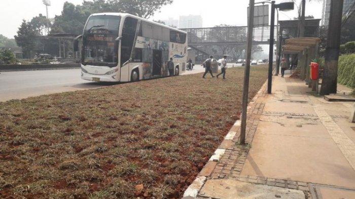 Area Hijau Pisahkan Halte Bus dengan Jalan Raya di Sudirman Bikin Bingung Warga