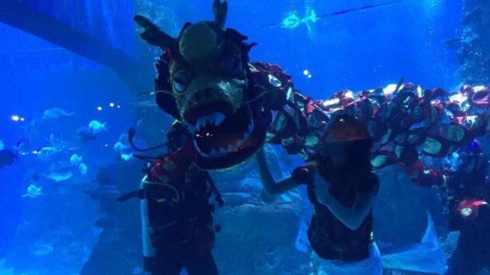 Atraksi liong bawah air bersama putri duyung di Jakarta Aquarium & Safari dalam merayakan tahun baru imlek, Jumat (12/2/2021).