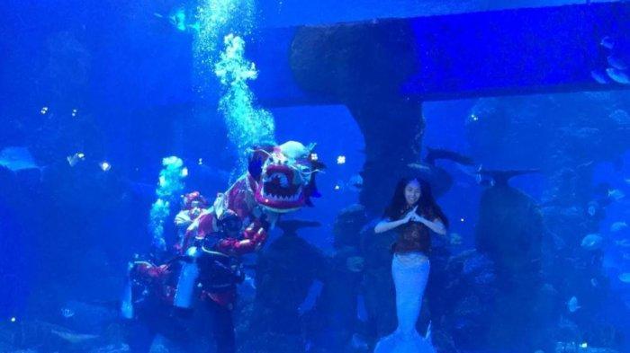 Libur Imlek, Pengunjung Saksikan Pertunjukan Liong Bawah Air di Jakarta Aquarium & Safari
