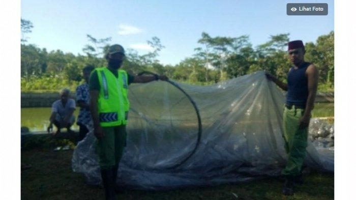 AirNav Terbitkan NOTAM Gangguan Balon Udara Liar, Pelanggar Bisa Didenda Sampai Rp 500 Juta